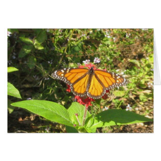 Austin butterfly greeting card