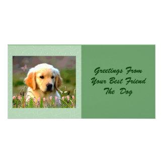 Austin el Labrador de oro Tarjeta Con Foto Personalizada
