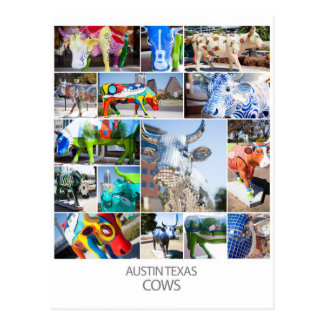Austin Texas Cows Postcard