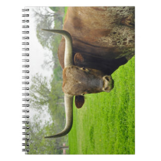 Austin Texas Longhorn Cow Photograph notebook