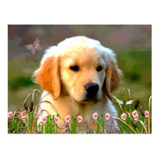 Austin The Golden Labrador Postcard