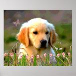 Austin The Golden Labrador Poster