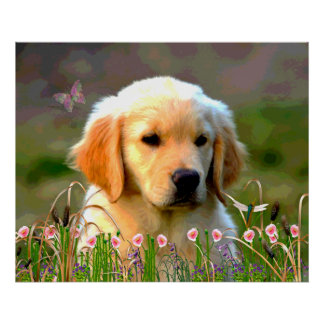 Austin The Golden Labrador Poster