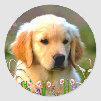 Austin The Golden Labrador Sticker