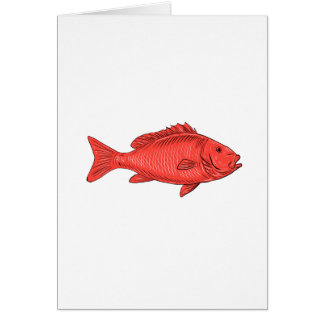 Australasian Snapper Swimming Drawing Card