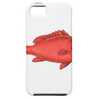 Australasian Snapper Swimming Drawing iPhone SE/5/5s Case