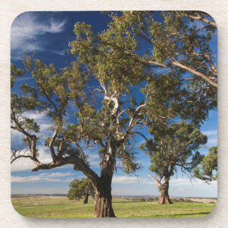 Australia, Barossa Valley, Mount Pleasant Drink Coaster