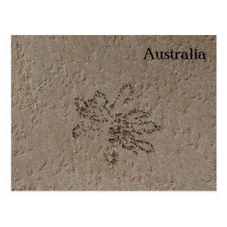Australia Beach - Sand Crab Flowers Postcard