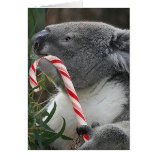 Australia Christmas Koala Bear Greeting Cards