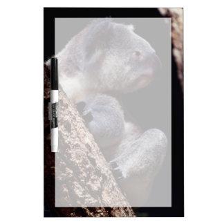 Australia, Close-Up of Koala (Phascolarctos Dry Erase Board