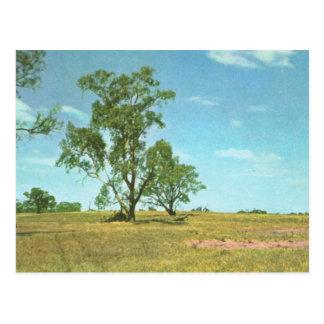 Australia, Eucalyptus trees, Hattab Lake area Postcard