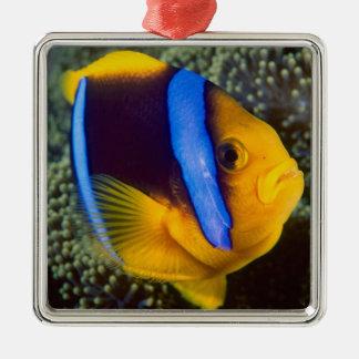 Australia, Great Barrier Reef, Anemonefish Metal Ornament