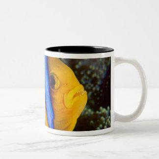 Australia, Great Barrier Reef, Anemonefish Two-Tone Coffee Mug