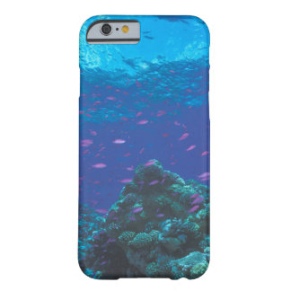 Australia, Great Barrier Reef. Swarming Purple Barely There iPhone 6 Case