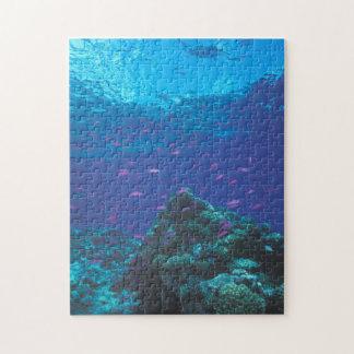 Australia, Great Barrier Reef. Swarming Purple Jigsaw Puzzle