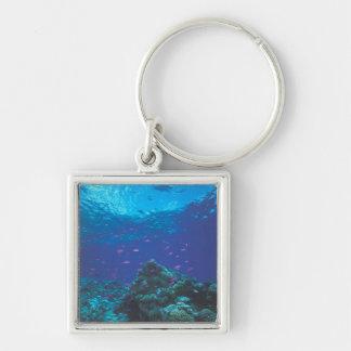 Australia, Great Barrier Reef. Swarming Purple Keychain