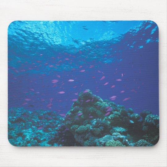 Australia, Great Barrier Reef. Swarming Purple Mouse Pad