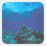 Australia, Great Barrier Reef. Swarming Purple Stickers