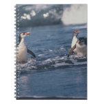 Australia, isla de Macquarie subantarctic. Real Libro De Apuntes Con Espiral