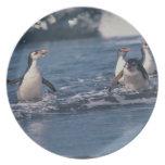 Australia, isla de Macquarie subantarctic. Real Platos Para Fiestas