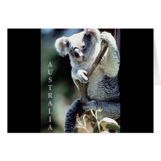Australia Koala Bear Card