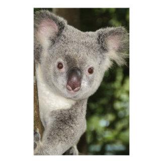 Australia koala bear cute animal stationery