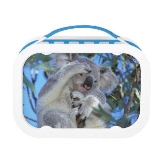 Australia, koala Phasclarctos Cinereus)