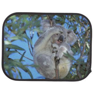 Australia, koala Phasclarctos Cinereus) Alfombrilla De Coche