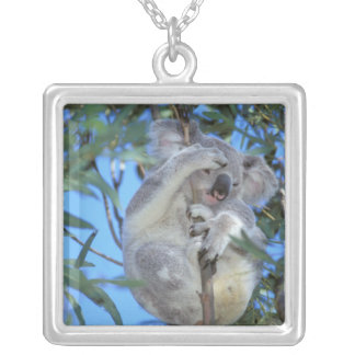 Australia, koala Phasclarctos Cinereus) Colgante Cuadrado
