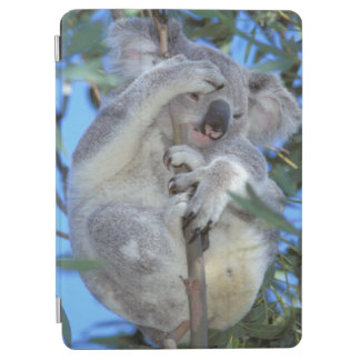 Australia, Koala Phasclarctos Cinereus) iPad Air Cover
