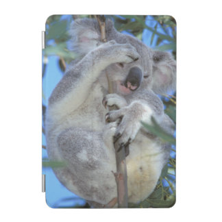 Australia, Koala Phasclarctos Cinereus) iPad Mini Cover