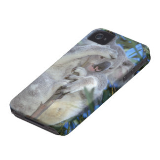 Australia, Koala Phasclarctos Cinereus) iPhone 4 Cover