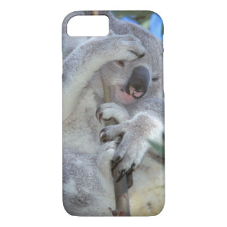Australia, Koala Phasclarctos Cinereus) iPhone 7 Case