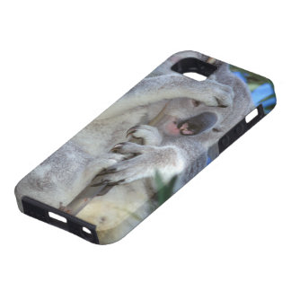 Australia, Koala Phasclarctos Cinereus) iPhone SE/5/5s Case