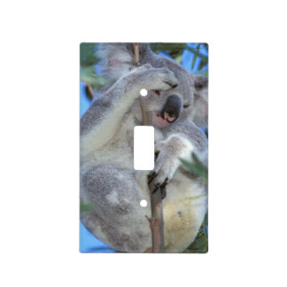 Australia, Koala Phasclarctos Cinereus) Light Switch Cover
