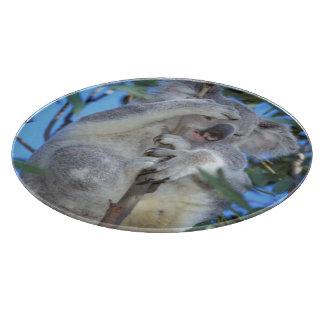 Australia, koala Phasclarctos Cinereus) Tabla Para Cortar