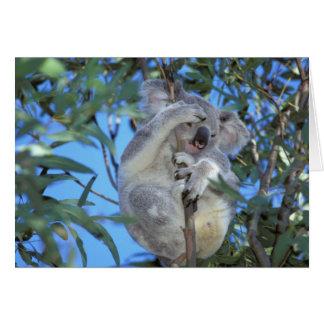 Australia, koala Phasclarctos Cinereus) Tarjeta De Felicitación