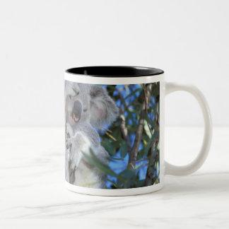 Australia, Koala Phasclarctos Cinereus) Two-Tone Coffee Mug