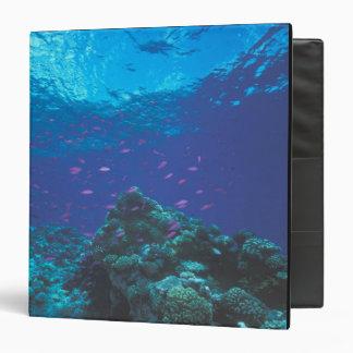 """Australia, la gran barrera de coral. Púrpura el pu Carpeta 1 1/2"""""""