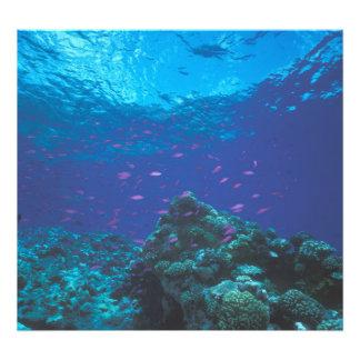Australia, la gran barrera de coral. Púrpura el pu Impresiones Fotográficas