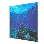 Australia, la gran barrera de coral. Púrpura el pu Lona Envuelta Para Galerias