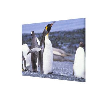 Australia, Macquarie Island, Buckles Bay. King Gallery Wrap Canvas
