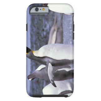 Australia, Macquarie Island, Buckles Bay. King Tough iPhone 6 Case