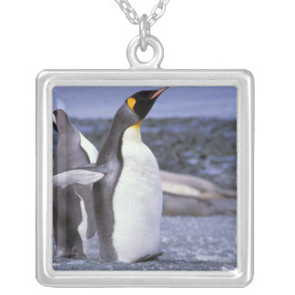 Australia, Macquarie Island, Buckles Bay. King Silver Plated Necklace