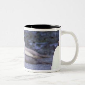 Australia, Macquarie Island, Buckles Bay. King Two-Tone Coffee Mug