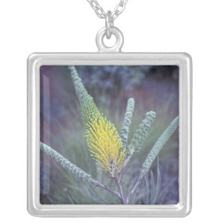 Australia, NT, near Ayers Rock. Springtime bloom Personalized Necklace