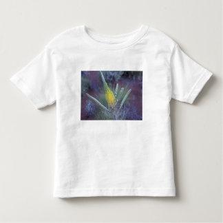 Australia, NT, near Ayers Rock. Springtime bloom Toddler T-shirt