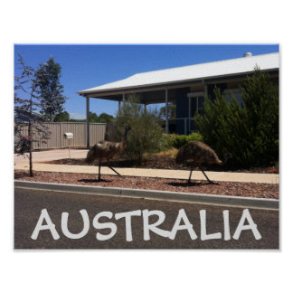 Australia Poster Emus on Street