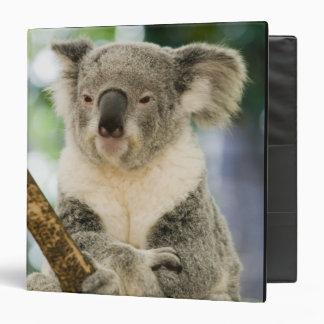 Australia, Queensland, Brisbane, Fig Tree 3 Ring Binder