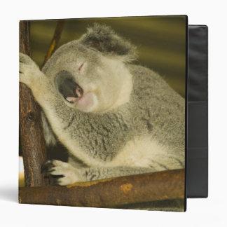 Australia, Queensland, Brisbane. Fig Tree Binder